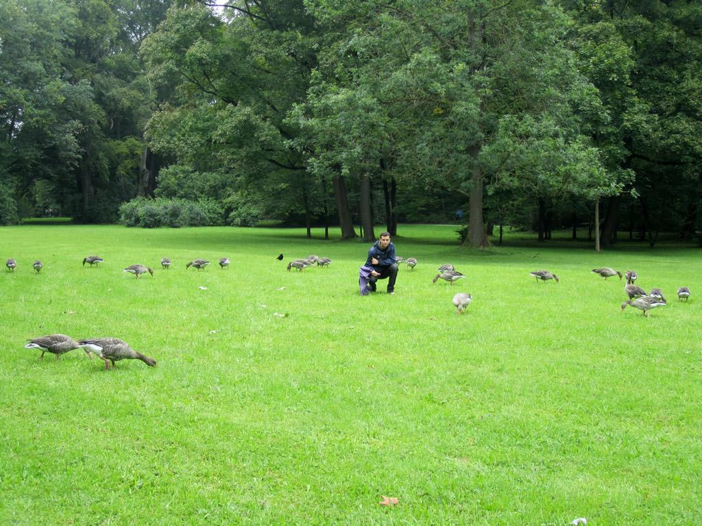 Oropesa en munich en el jardin ingles con patos patos for Jardin en ingles